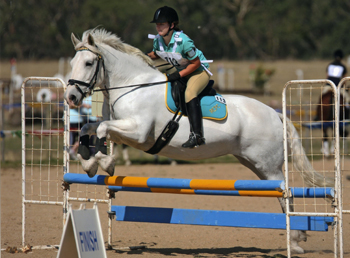 Sue's daughter jumping her Percheron Clydie cross