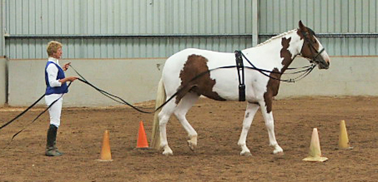 Clydesdale Cross Sport Horse Association Show